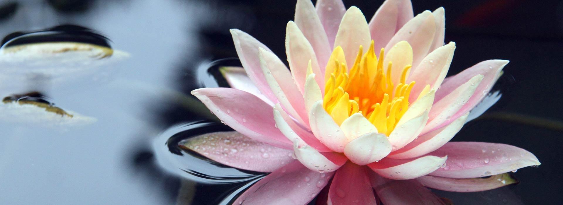 lotus-spiritual-retreat